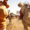 017_Fingerbob Camel Rides